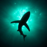 14875-shark-1920x1200-digital-art-wallpaper